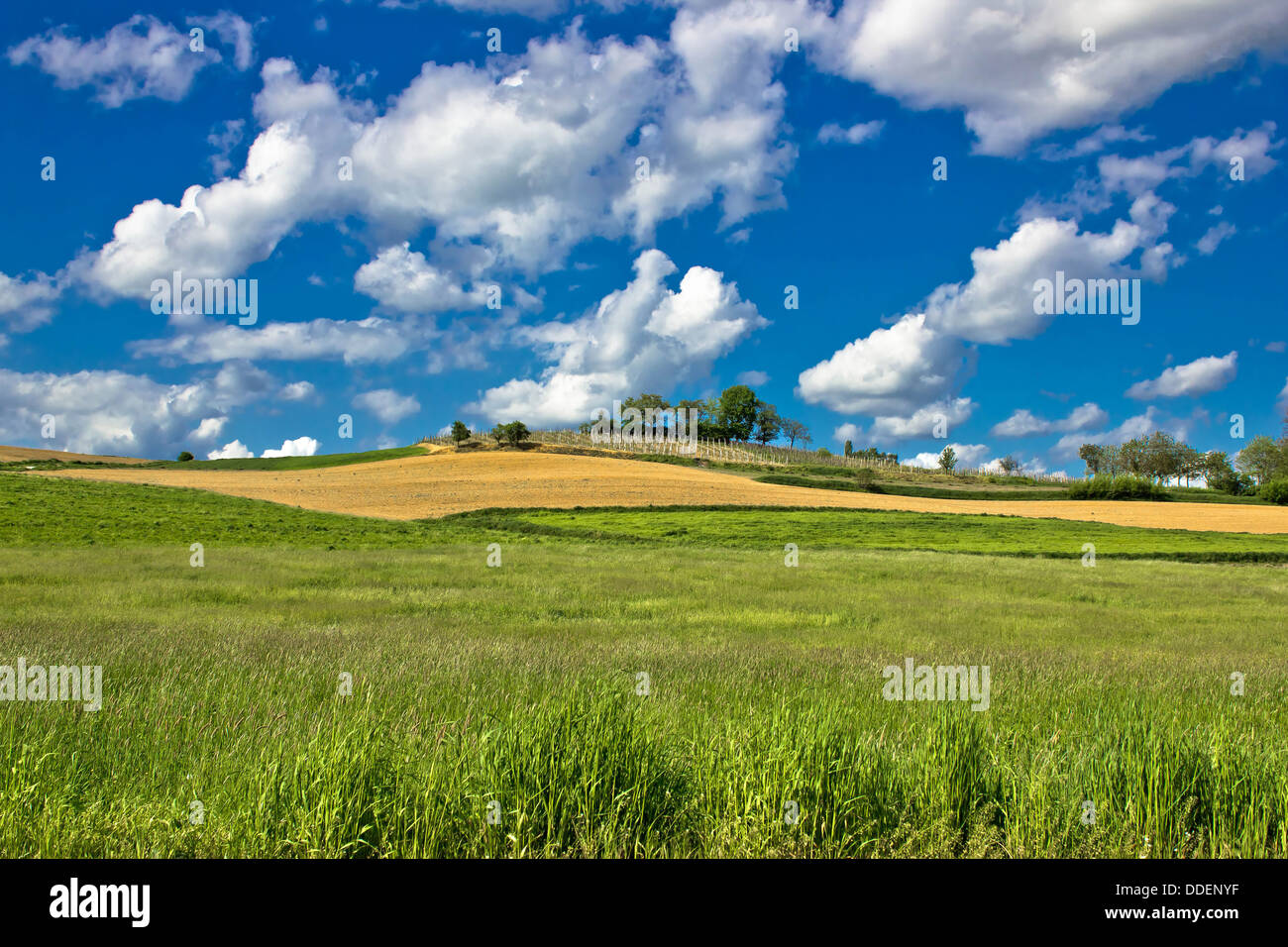Green nature scenery under blue sky, pictoresque landscapes of Croatia - Stock Image