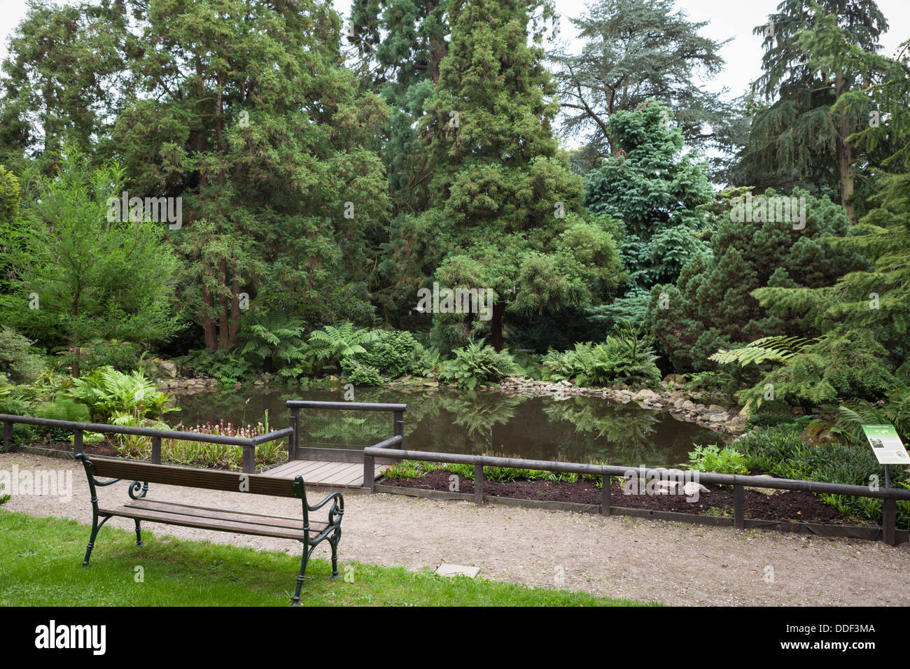 Mesozoic garden and pond at the Pinetum in Hilversum in the Netherlands - Stock Image