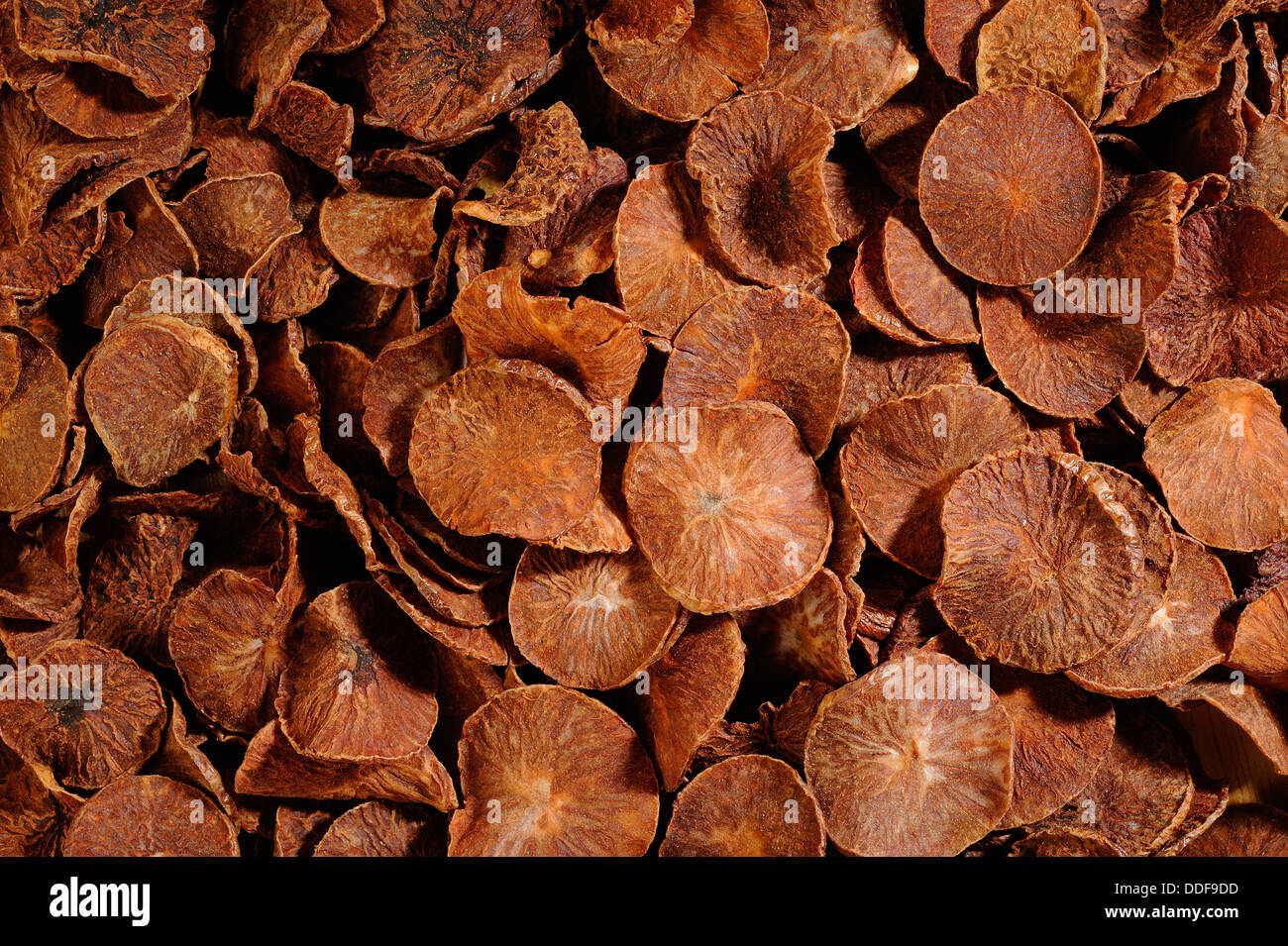 dried betel nut background - Stock Image