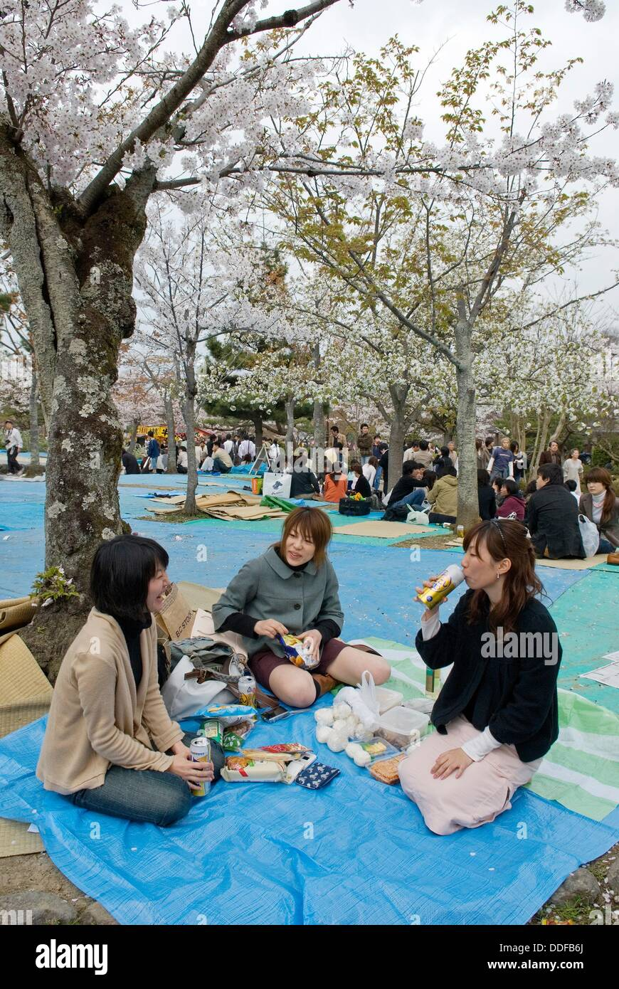 picnic under cherry blossoms pic nic sous les cerisiers en. Black Bedroom Furniture Sets. Home Design Ideas