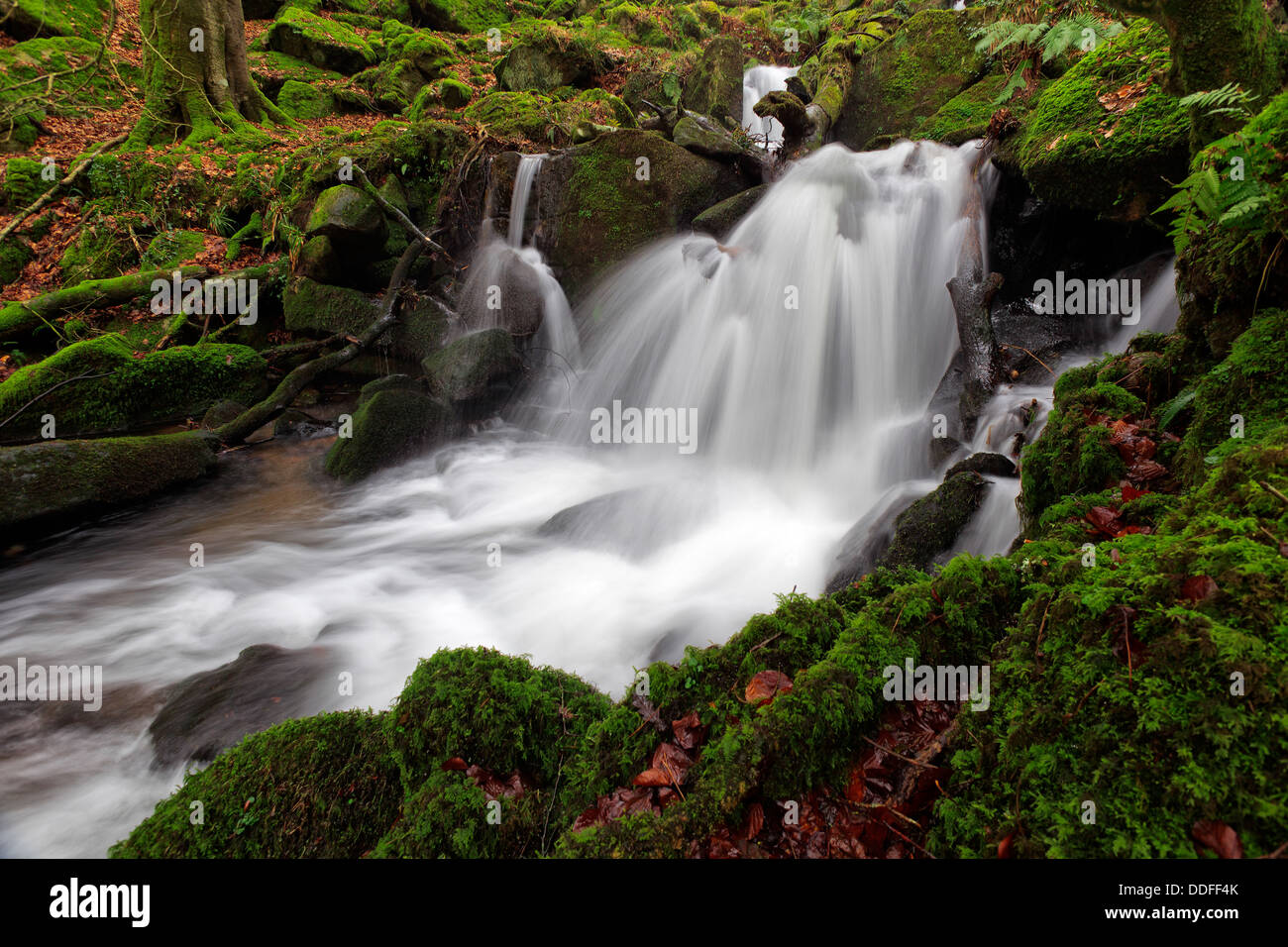 Dartmoors Secrets - Stock Image
