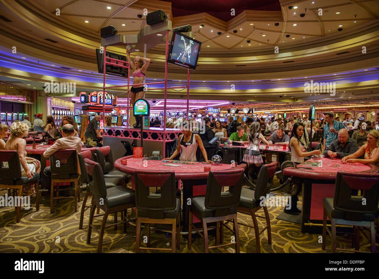 Kennel club poker hours