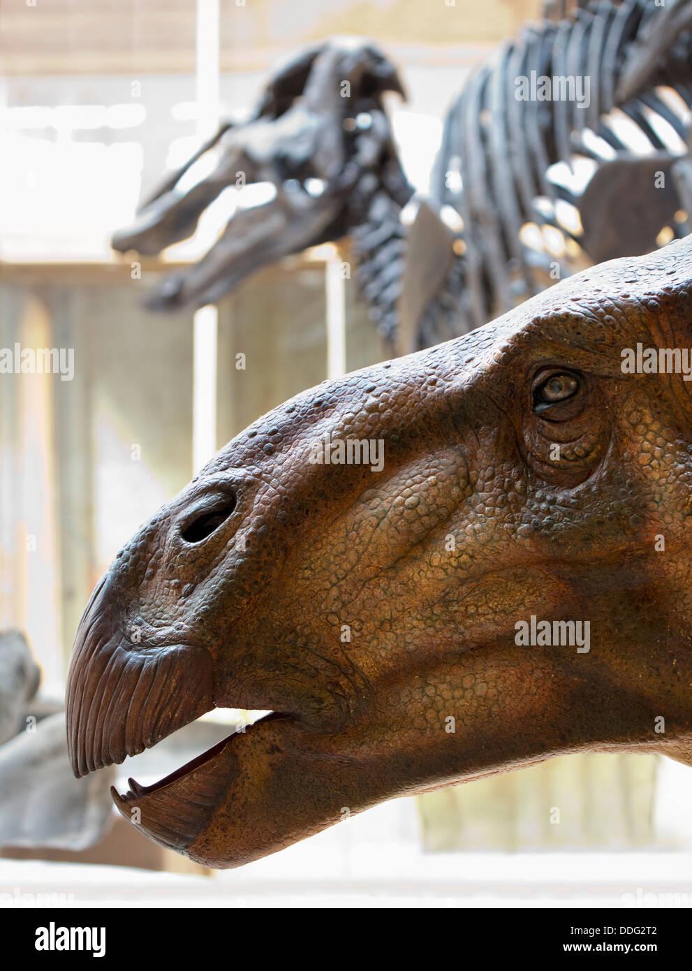 Dinosaur bones at the Pitt Rivers Natural History Museum, Oxford 2 - Stock Image
