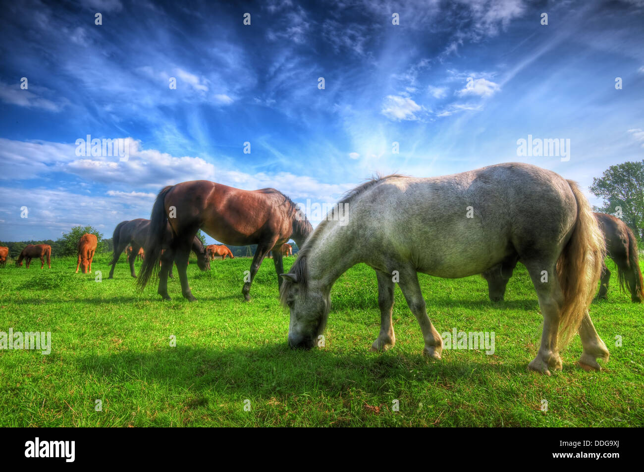 Beautiful horses in a field. Stock Photo