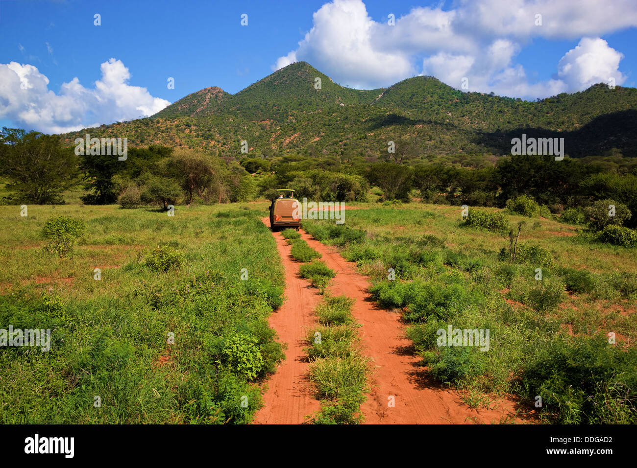 Driving along a dirt road through the Tsavo West National Park, Kenya, Africa on safari - Stock Image
