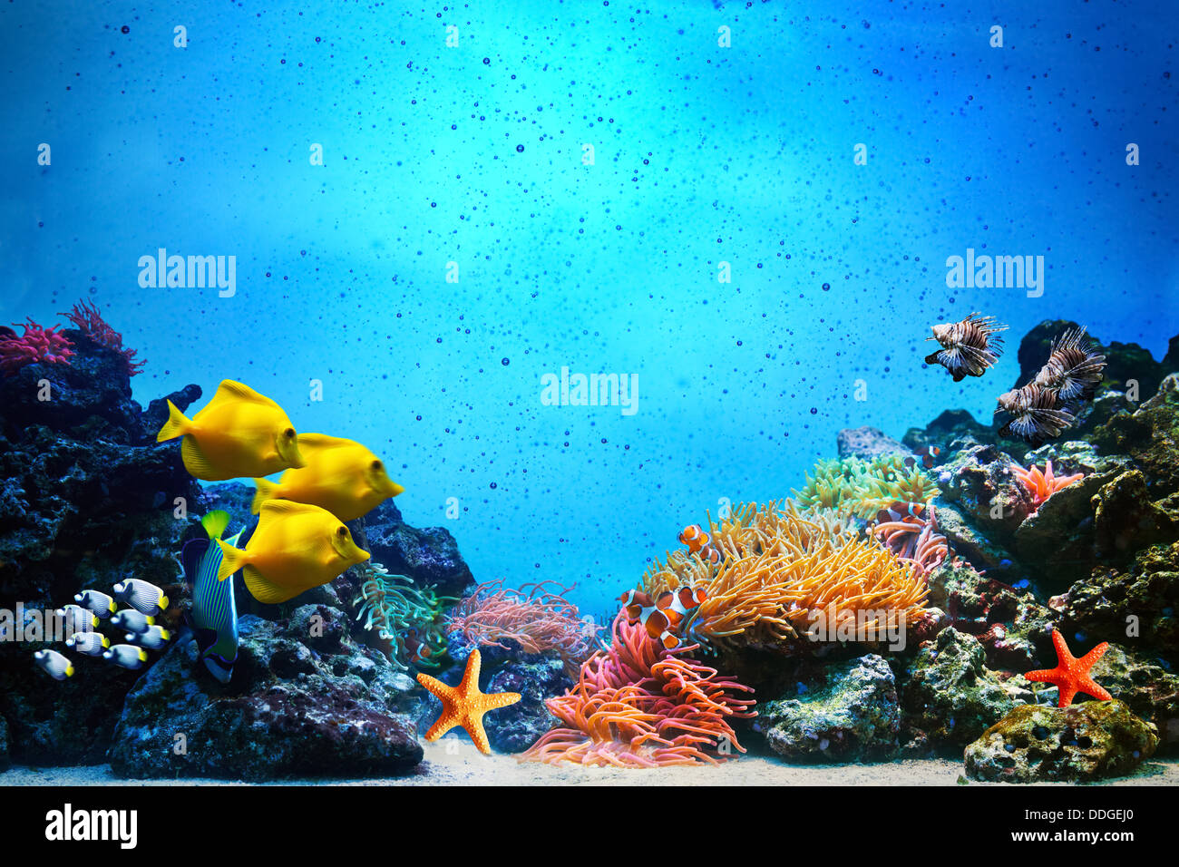 Underwater scene with coral reef - Stock Image