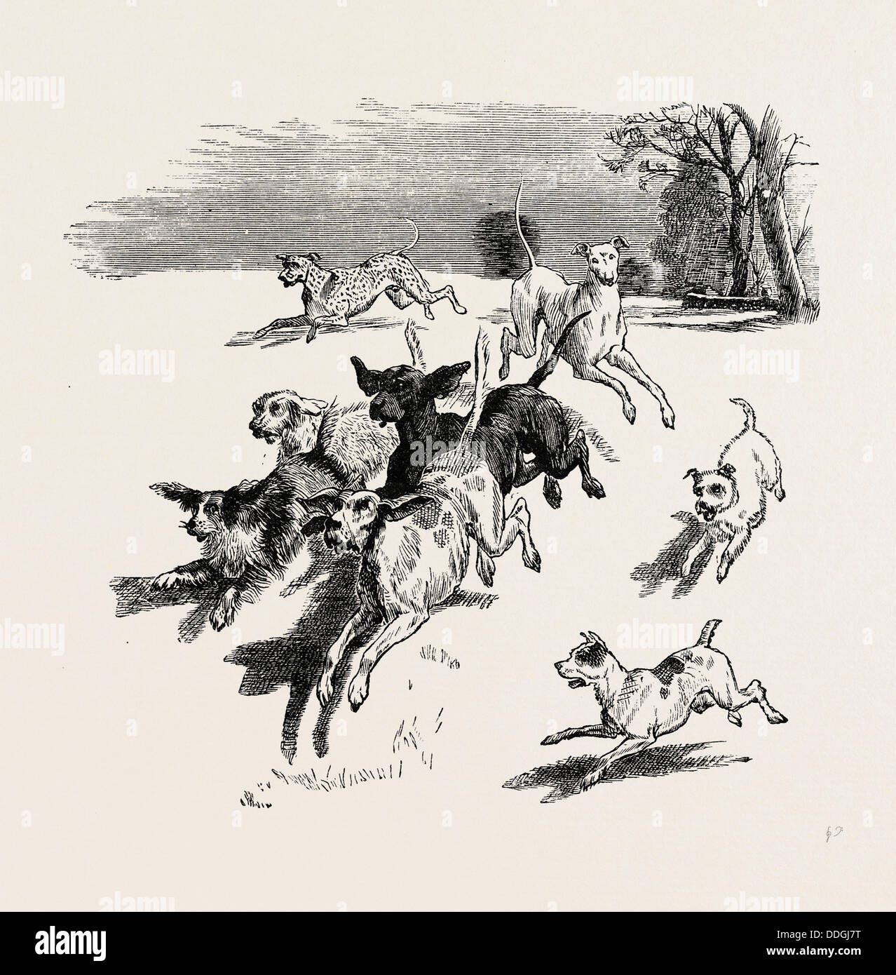 A TROOP OF DOGS, 19th century - Stock Image