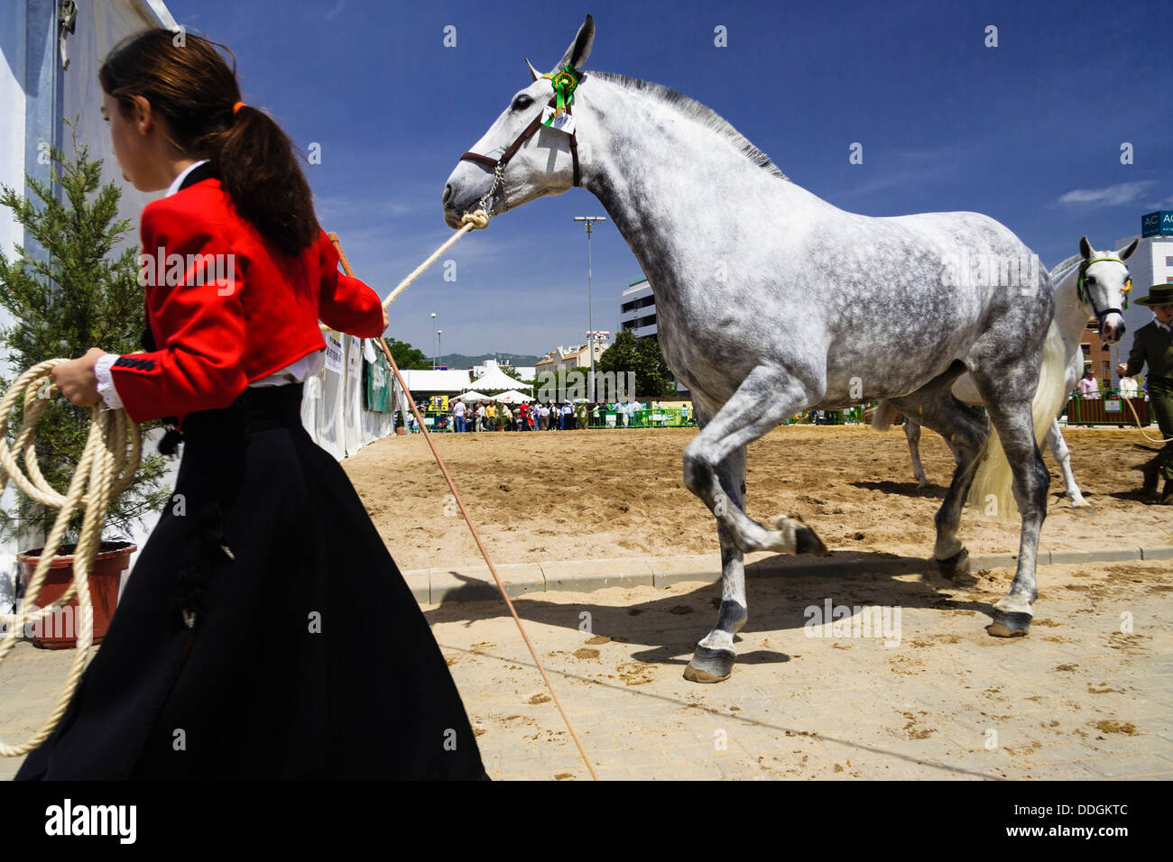 Girl in traditional riding dress taking her thoroughbred mare at the Cordoba Horse Fair. Andalusia, Spain - Stock Image