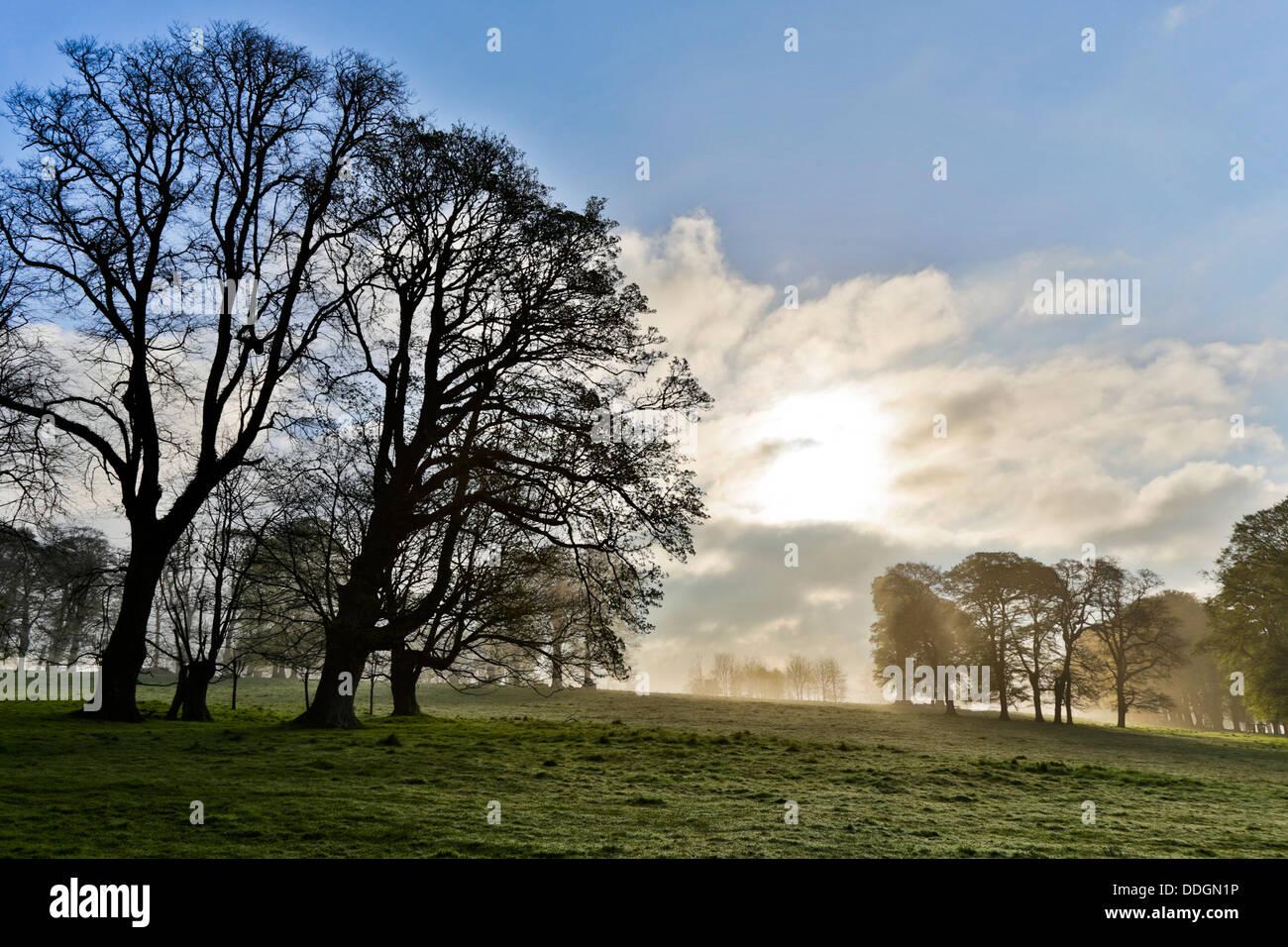 Parkland Trees; Lanhydrock; Cornwall; UK - Stock Image