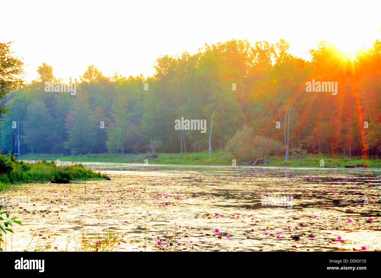 A Swamp Sunrise in the late summer season. - Stock Image
