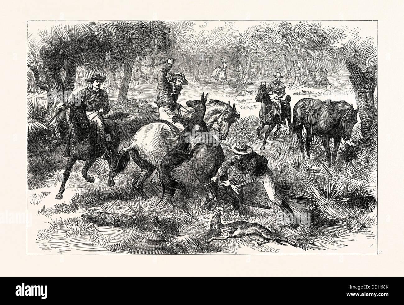 KANGAROO-HUNTING IN AUSTRALIA - Stock Image