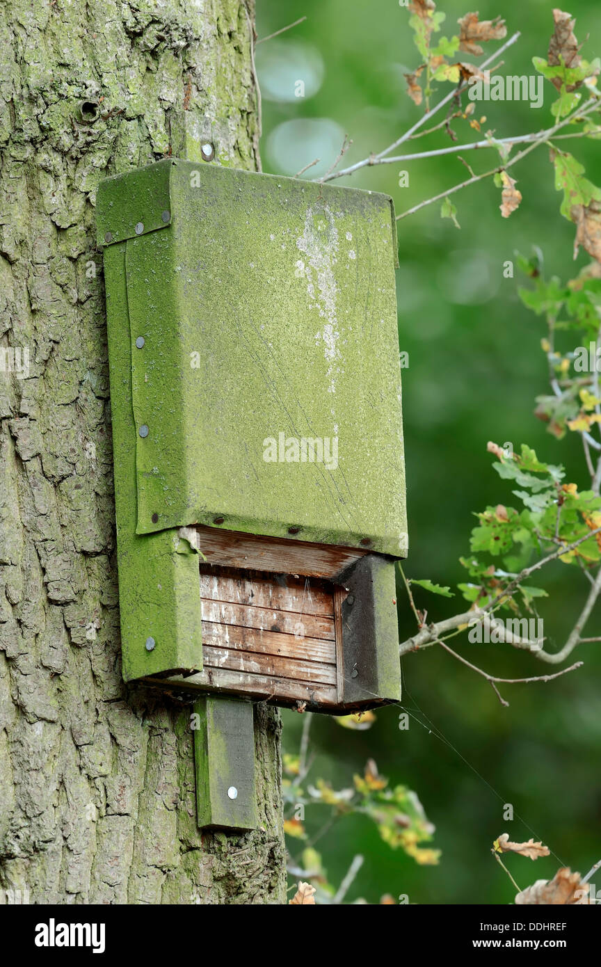 Bat box on a tree - Stock Image