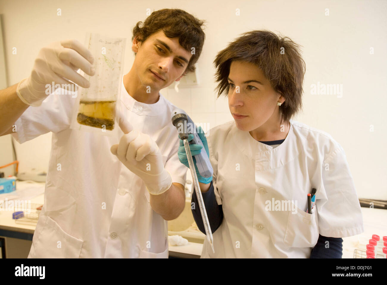 Homogenized sample for bacteria cultivation, Laboratory of Bacteriology, Departamento de Producción y Sanidad Animal, Neiker - Stock Image