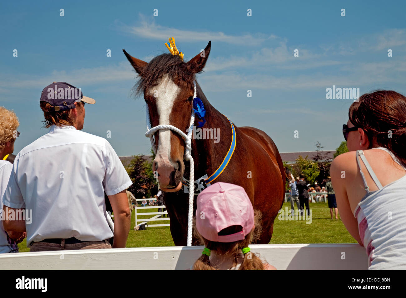 People looking at a shire horse at the Great Yorkshire Show Harrogate North Yorkshire England UK United Kingdom GB Great Britain - Stock Image