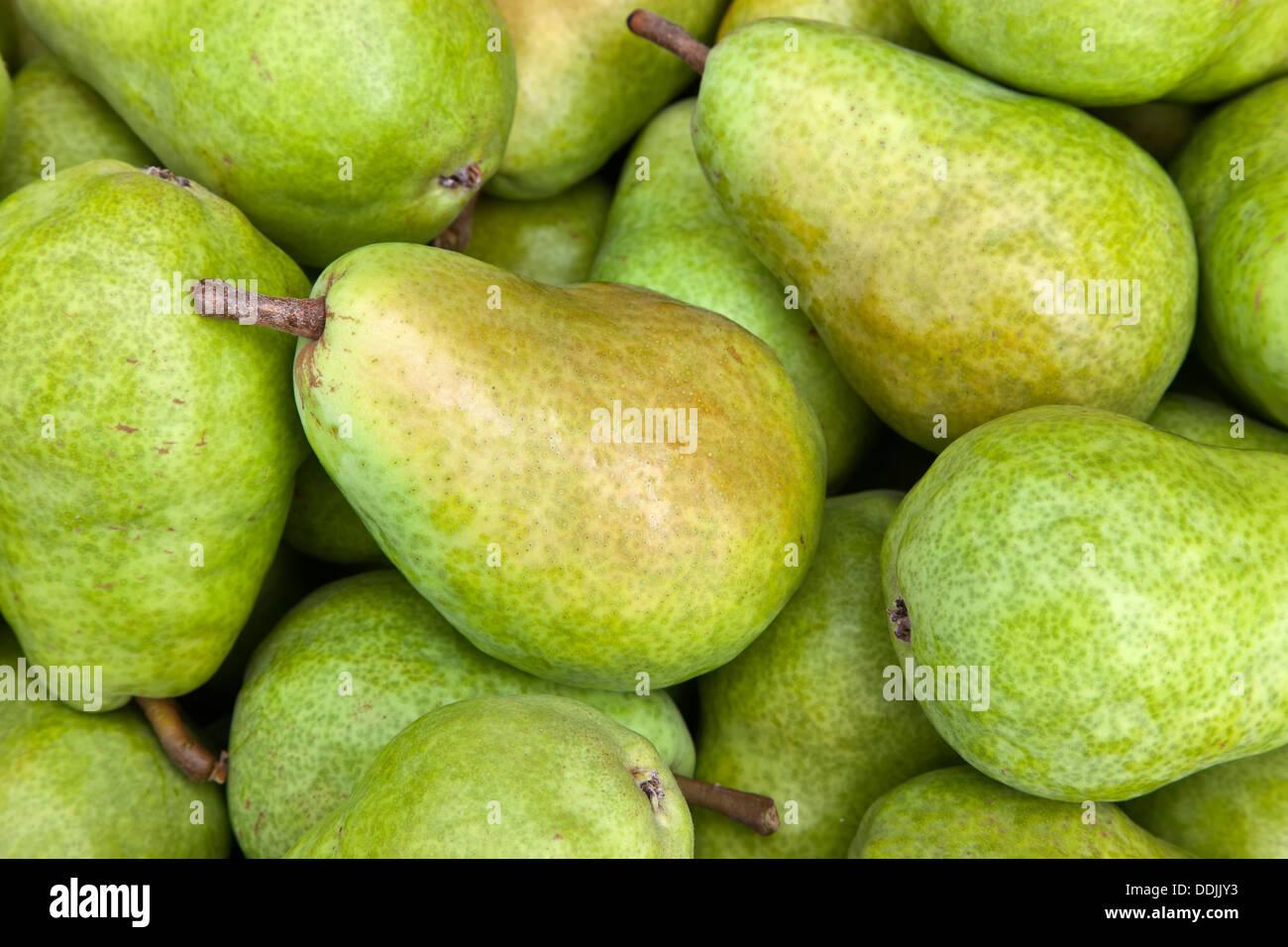 Harvested bartlett pears 'Pyrus communis'. - Stock Image