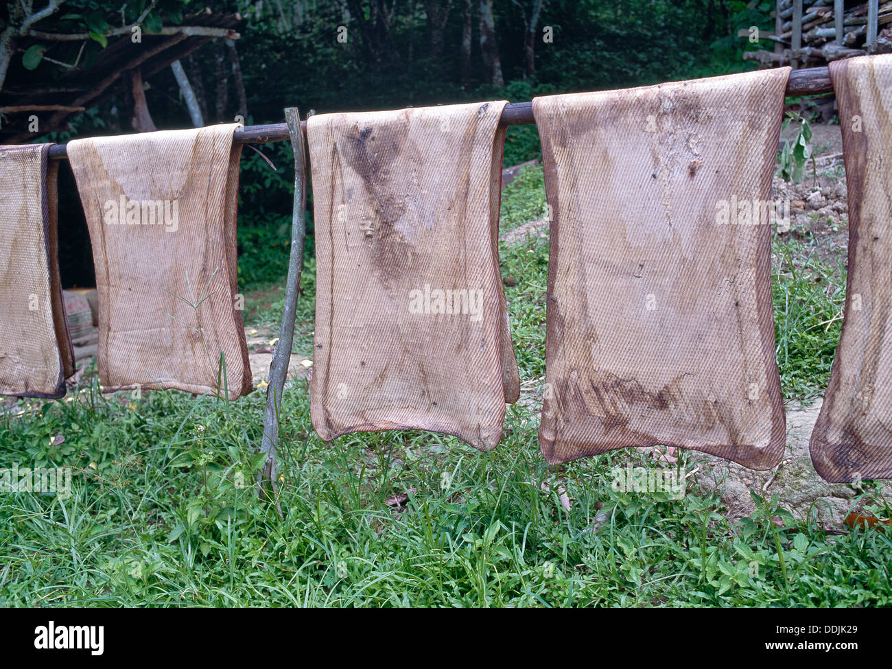 Raw latex rolled sheets drying, native village. - Stock Image