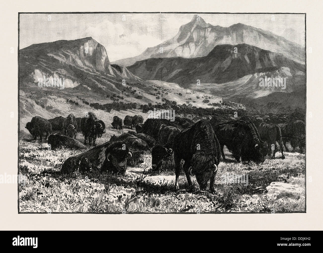 AT THE FOOTHILLS OF THE ROCKY MOUNTAINS, CANADA, NINETEENTH CENTURY ENGRAVING - Stock Image