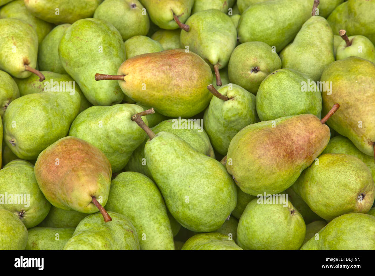 Farmers market, harvested bartlett pears 'Pyrus communis'. - Stock Image