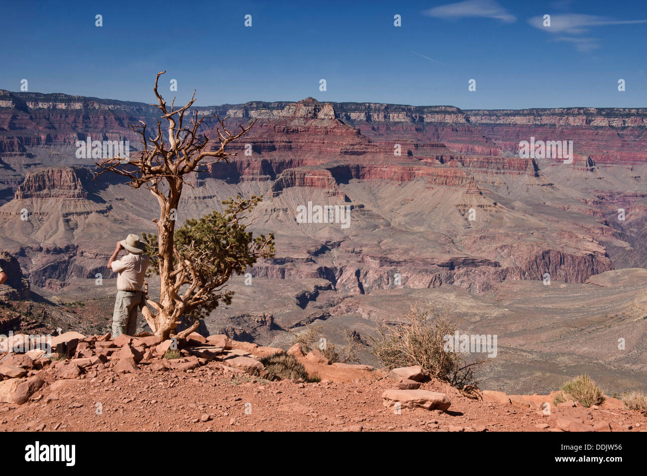 The view from Cedar Ridge on the Kaibab Trail, Grand Canyon National Park, Arizona - Stock Image