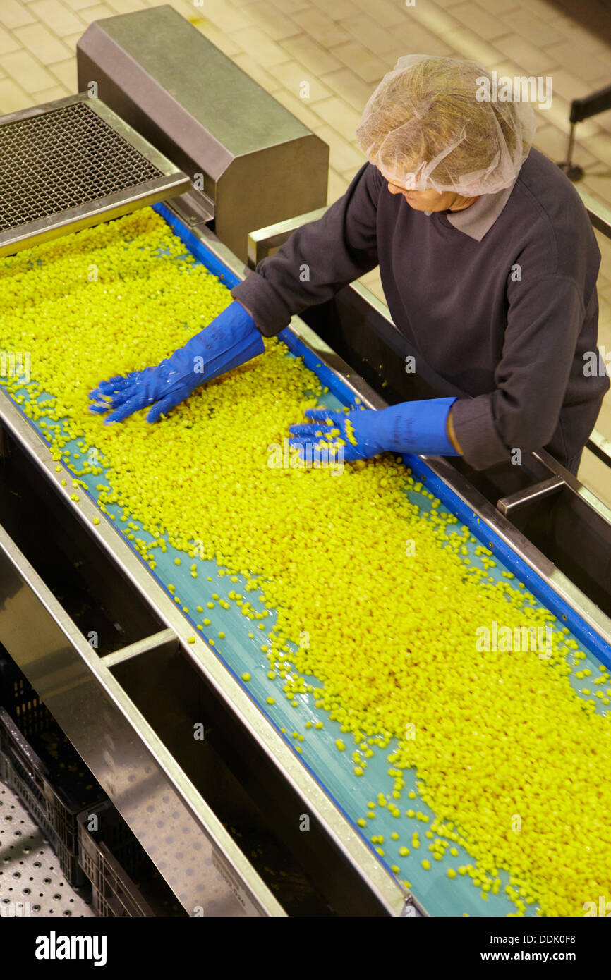 Production line of canned vegetables and beans in glass bottle, Corn, Maize, Canning Industry, Agri-food, Logistics Center, - Stock Image