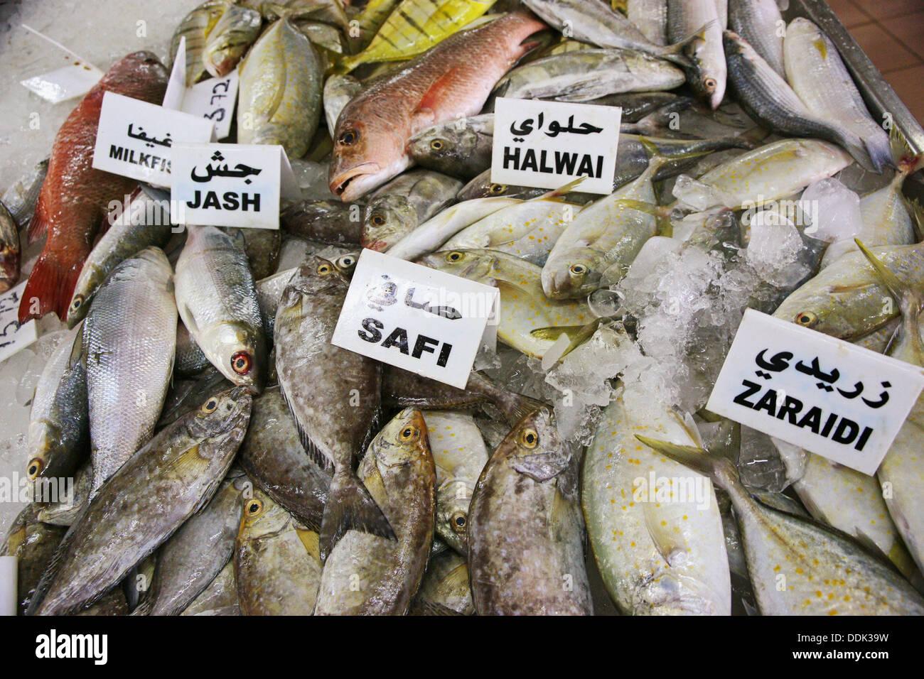 Abu Dhabi Fish Market Stock Photos & Abu Dhabi Fish Market