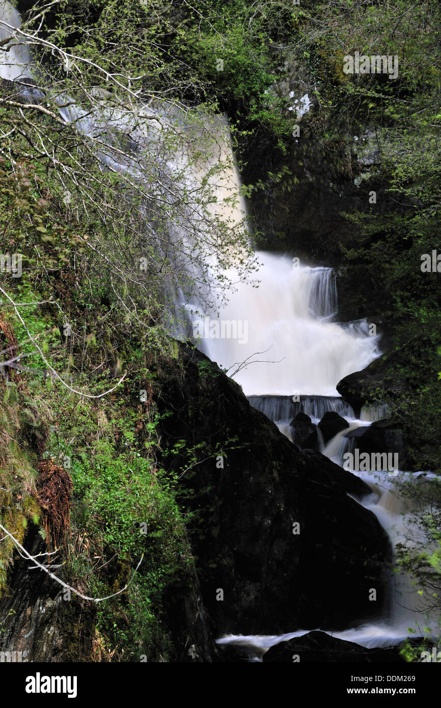 Torrential water cascading through Pecca Glen, Ingleton, Yorkshire, England - Stock Image