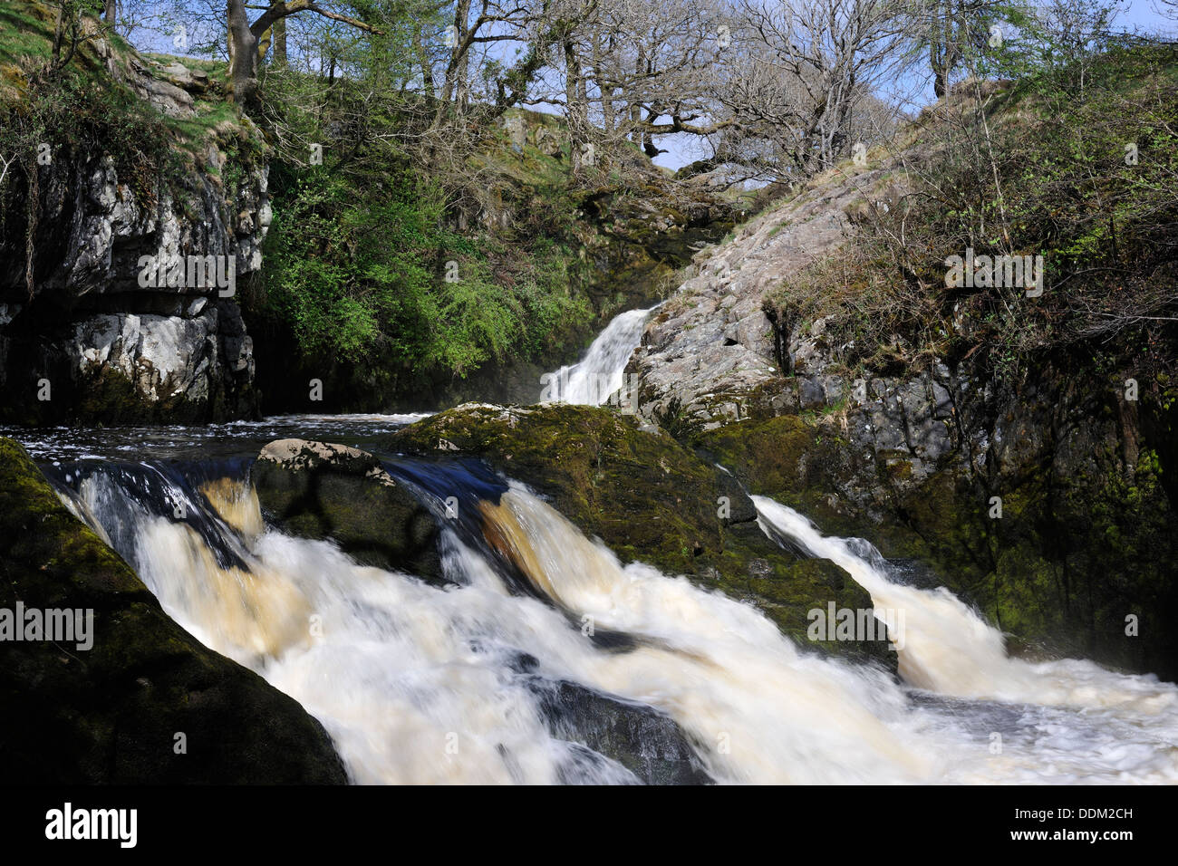 Early Spring torrent over 'Triple Spout' waterfall, Ingleton, Yorkshire, England - Stock Image