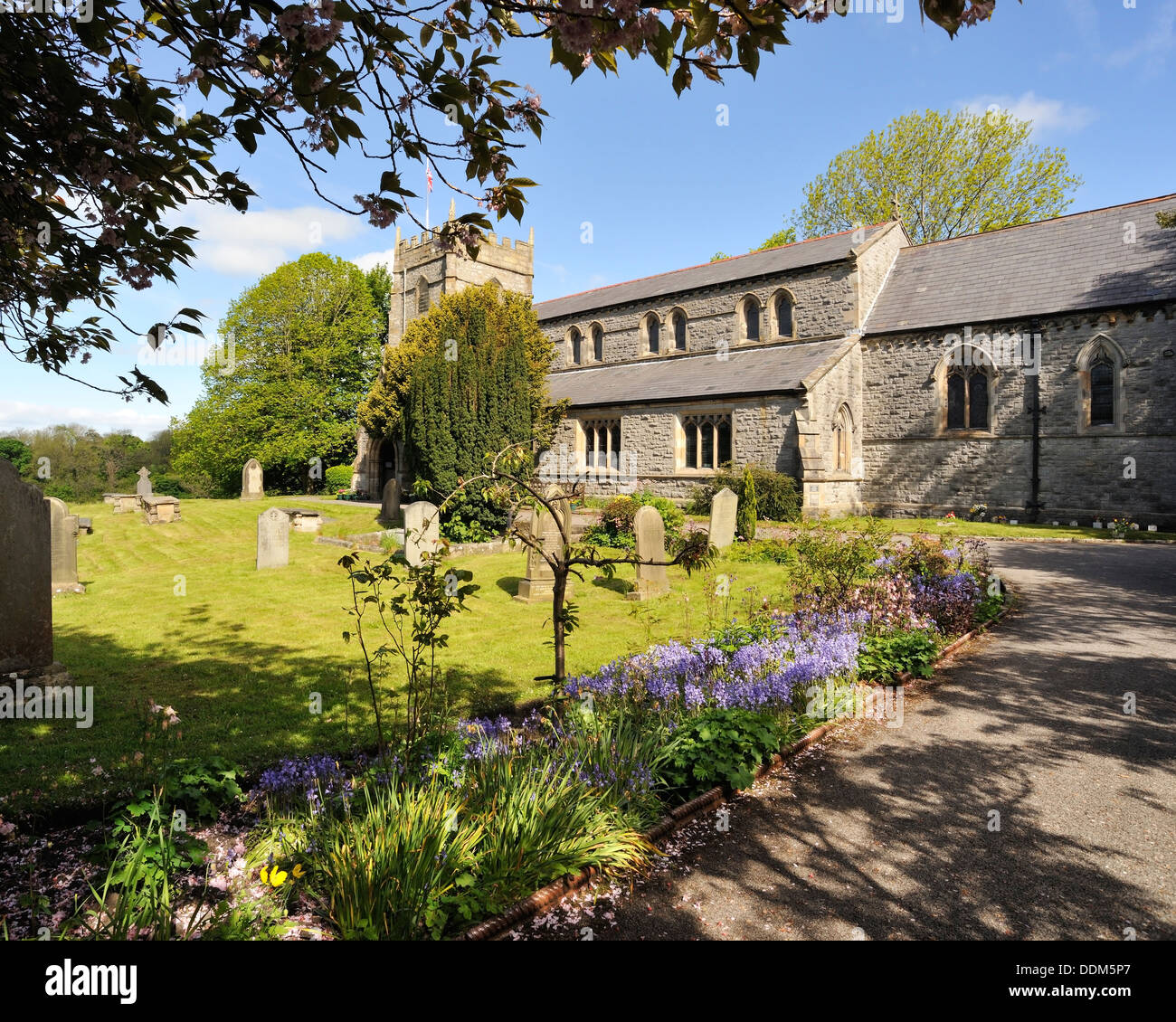 Bluebells lining the entrance to St Mary's Church, Ingleton, Yorkshire Dales National Park, England - Stock Image