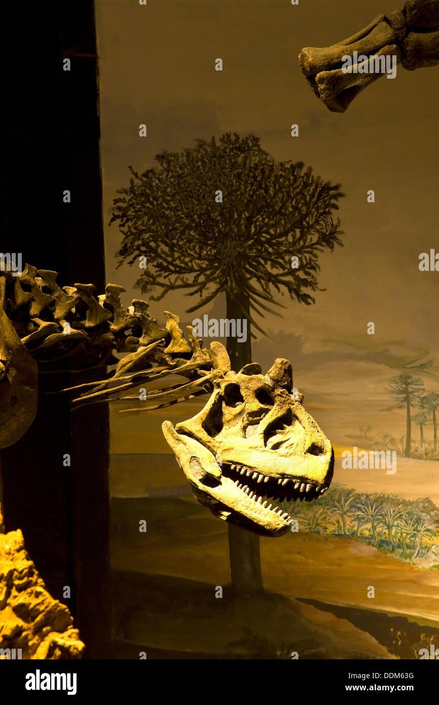 Egidio Feruglio Museum of Paleontology, Trelew, Patagonia, Argentina - Stock Image