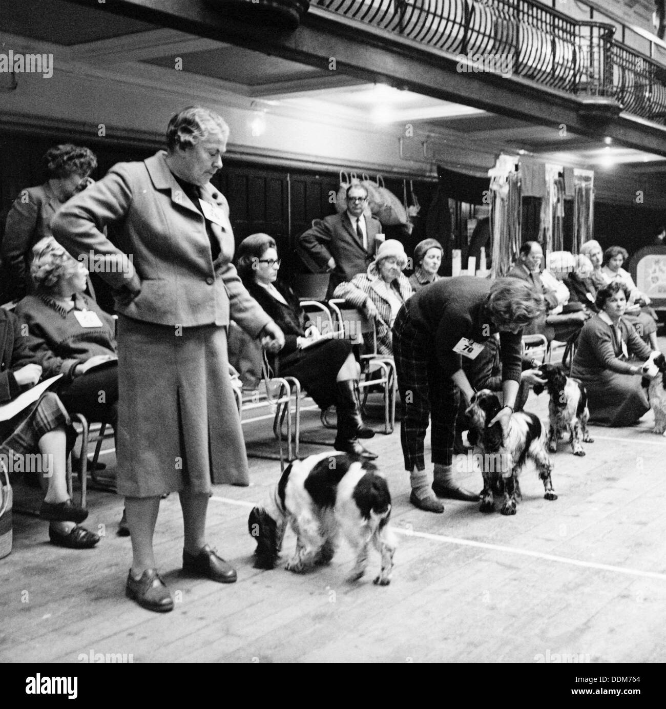 Owners parading their dogs at a London dog show, possibly Crufts, 1964. Artist: Henry Grant - Stock Image