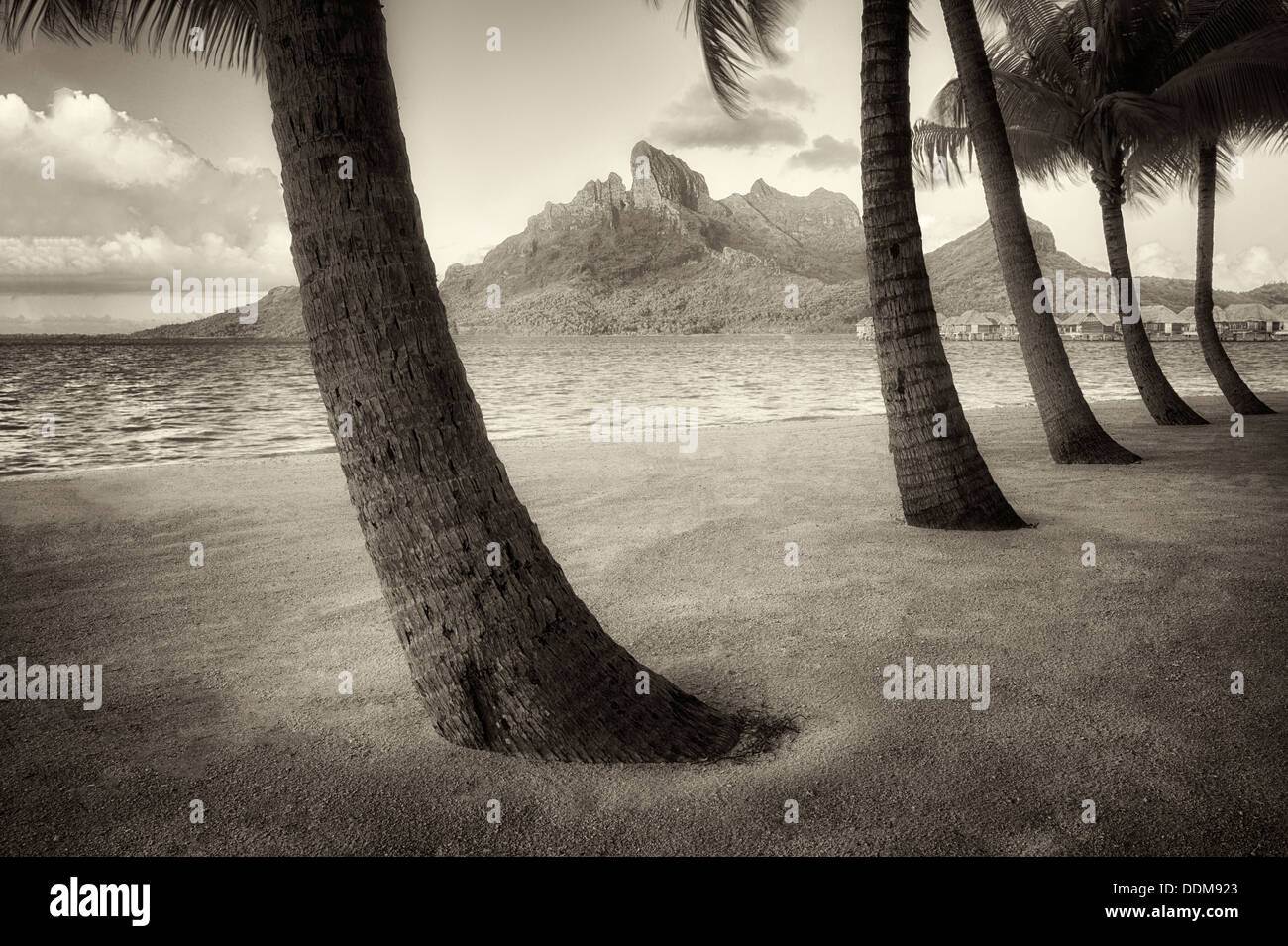 Sandy beach with palm trees and Mt. Otemanu. Bora Bora. French Polynesia. - Stock Image