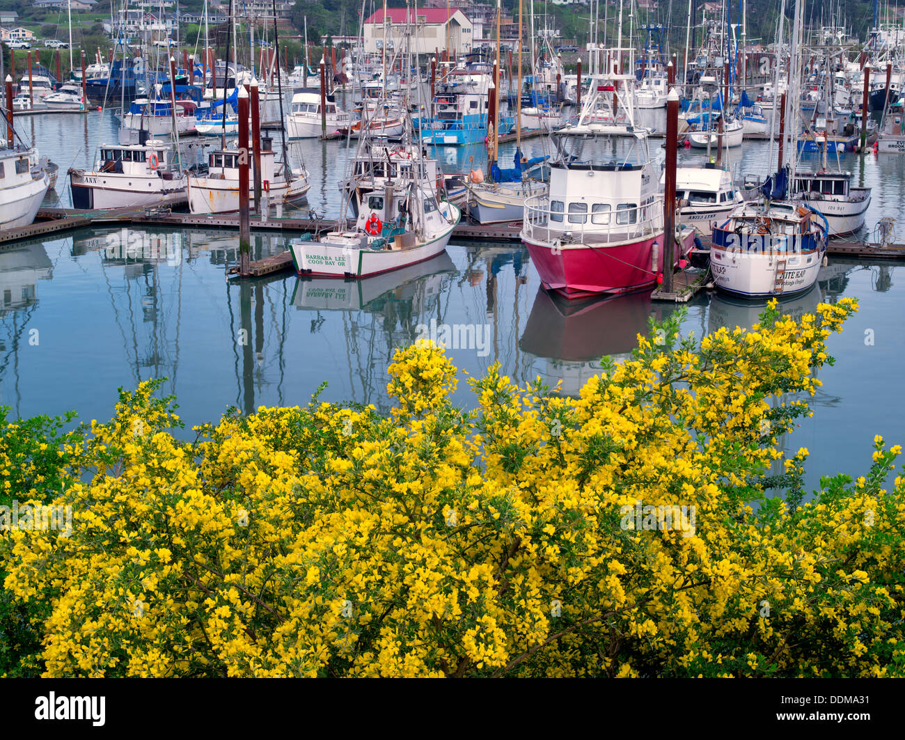 Fishing boats and flowering gorse. Brookings Harbor, Brookings, Oregon. - Stock Image