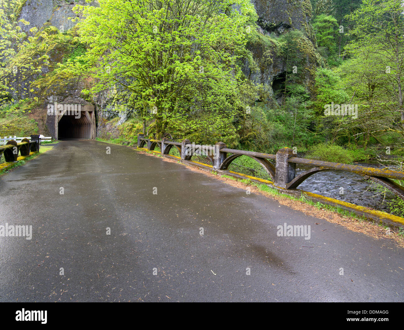 Old Columbia River Highway and tunnel. Columbia River Gorge National Scenic Area. Oregon - Stock Image