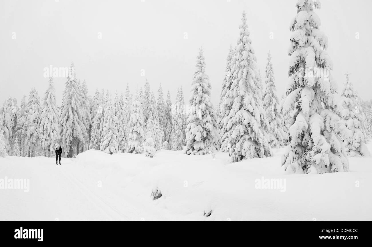 Winter in mountains. Jakuszyce cross-country skiing trial. - Stock Image