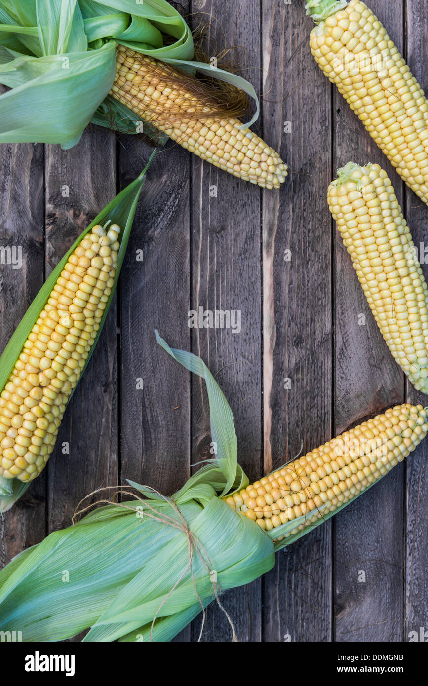 Freshly picked corn on the cob. - Stock Image