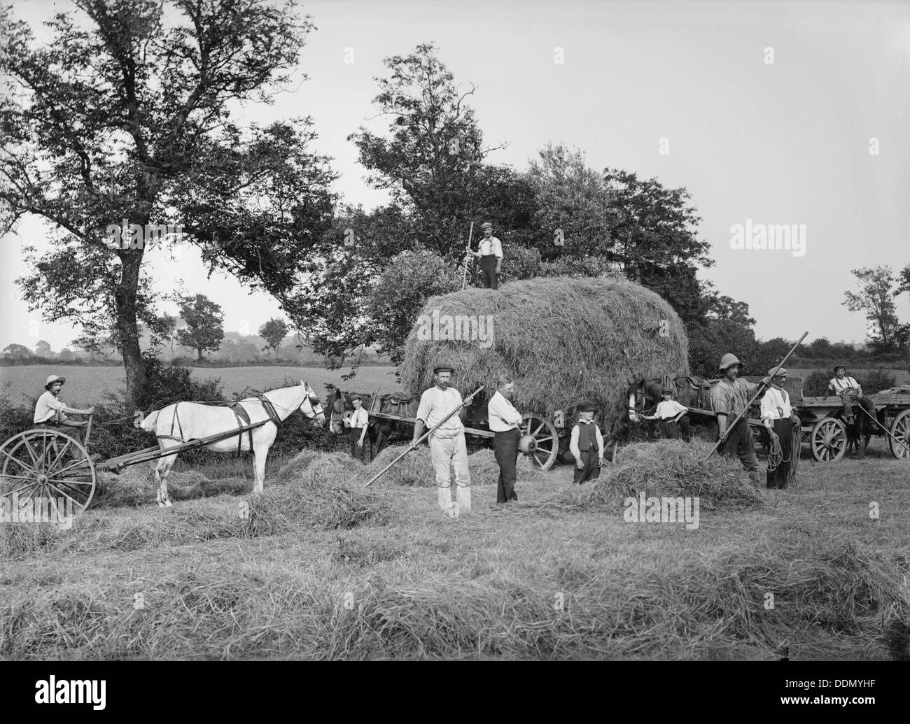 Haymaking near Byfield, Northamptonshire, 1908. Artist: A Newton - Stock Image