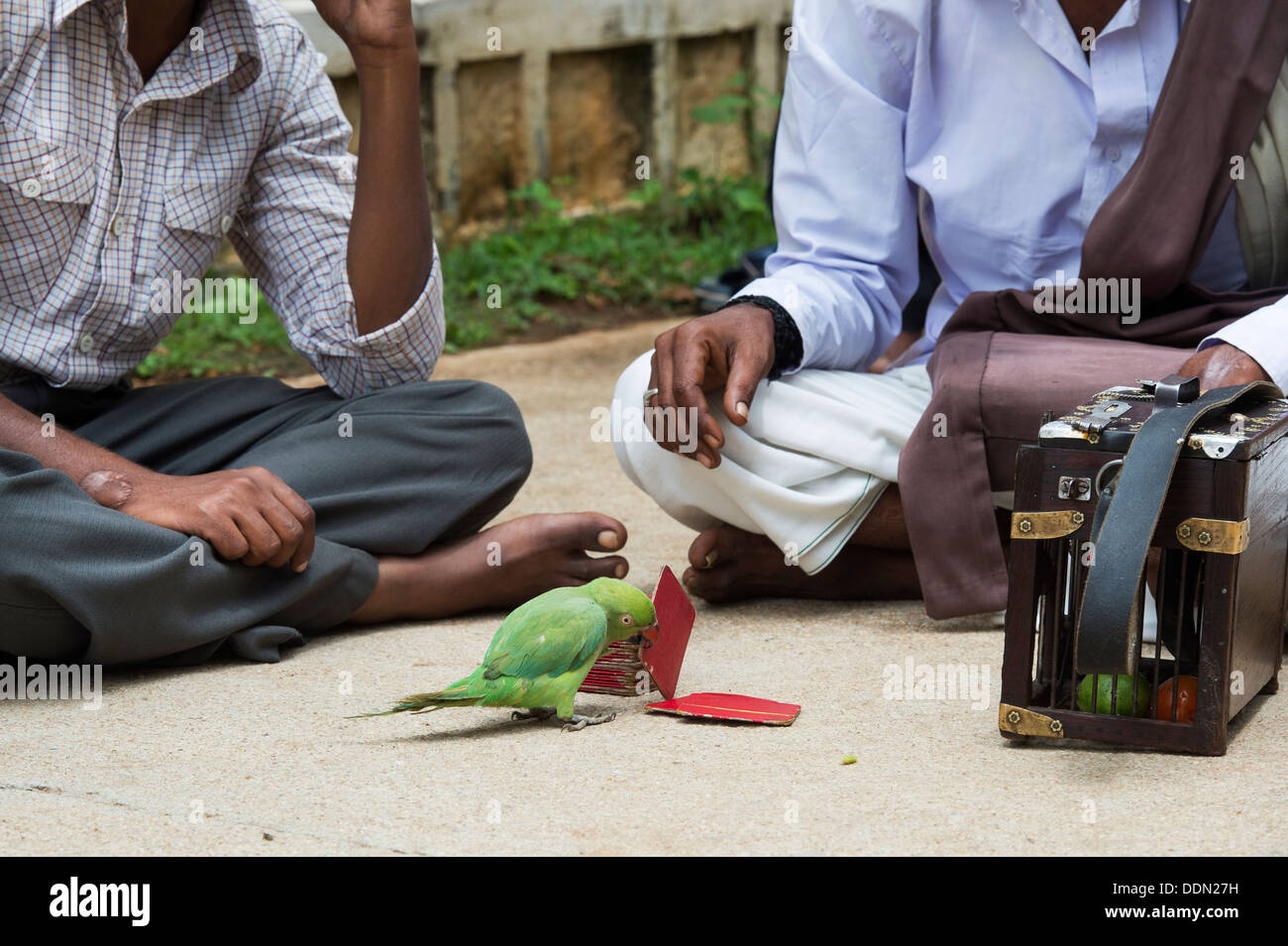 Parrot astrology. Indian street Astrologer / Fortune Teller with a parrot. Andhra Pradesh, India - Stock Image