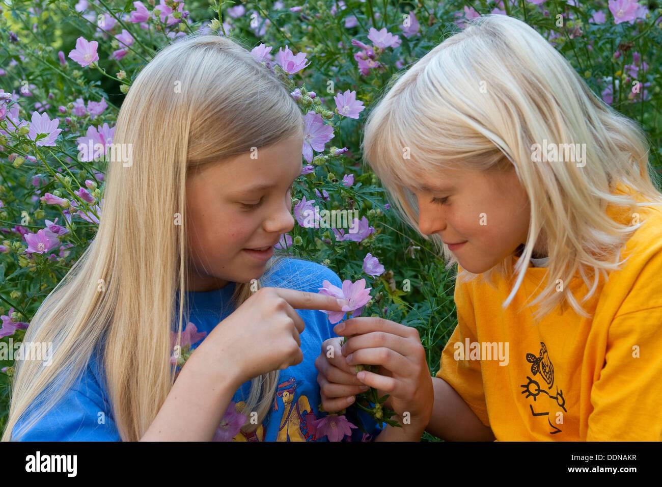 Children look at flowers, cheeseweed, mallow, hollyhock, Kinder, Geschwister betrachten Blumen, Malve, Malva - Stock Image