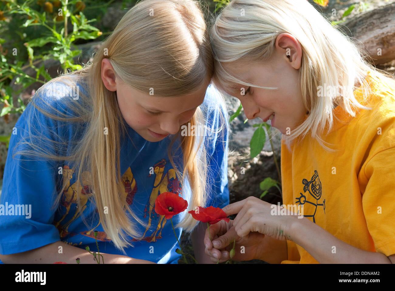 Children look at flowers, poppy, Kinder, Geschwister betrachten Blumen, Mohn, Klatschmohn, Papaver rhoeas - Stock Image