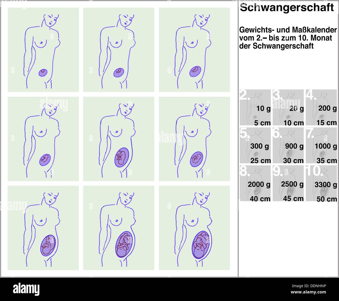 Pregnancy Caledar Seroton Ponderresearch Co