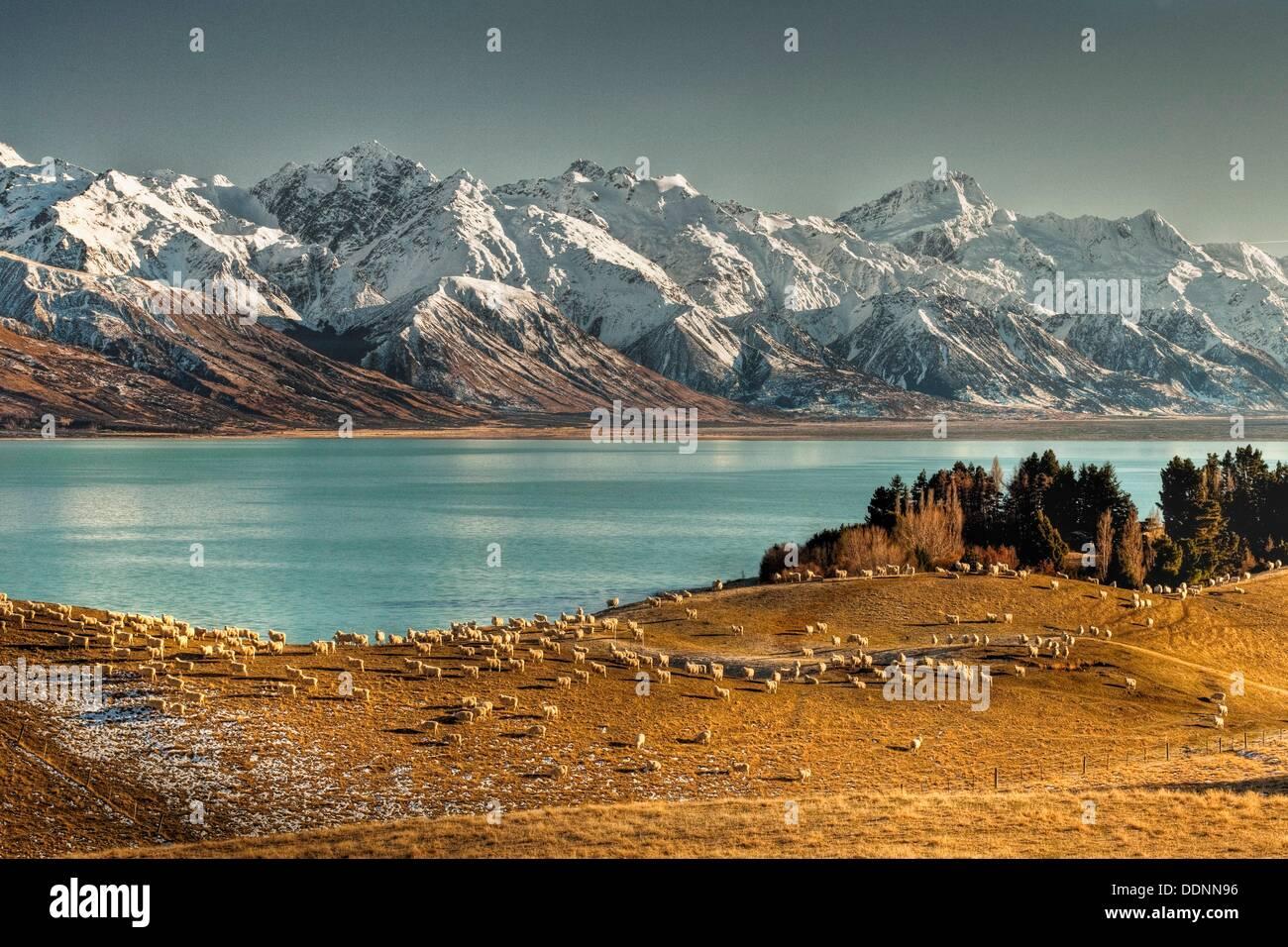High country sheep station, Mt Sefton behind, Lake Pukaki, Ben Ohau Range behind, Canterbury. - Stock Image