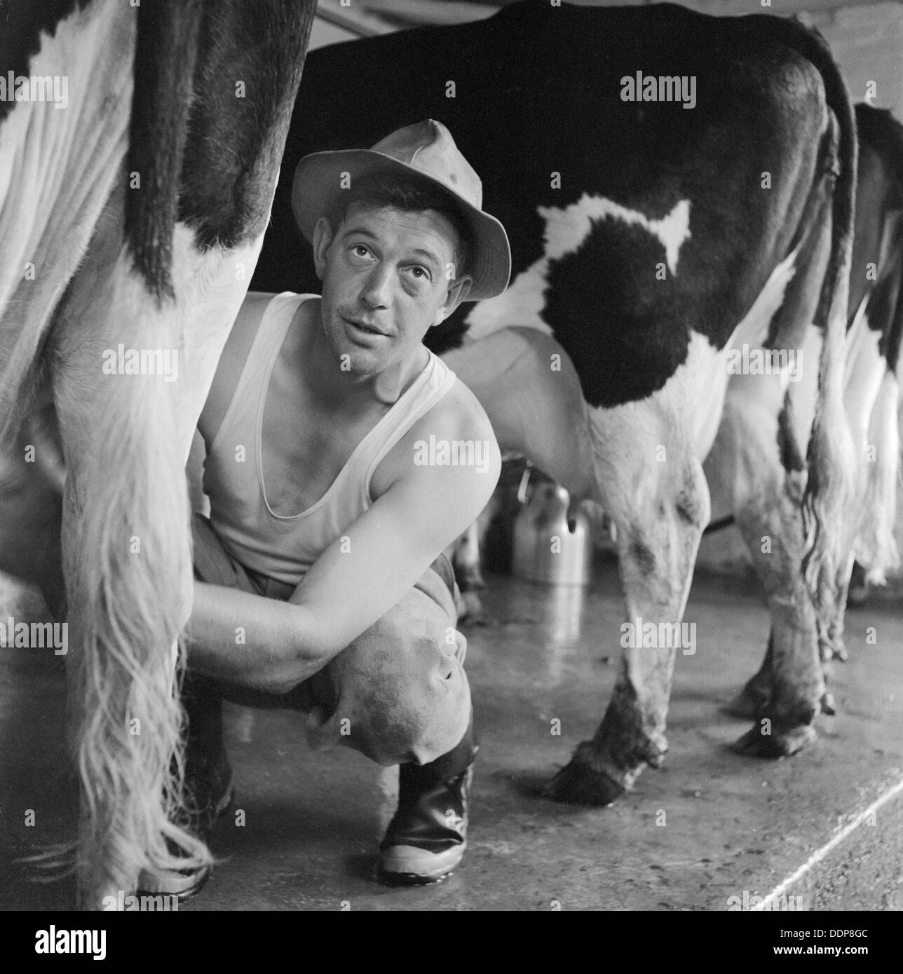 from Lachlan gay milking the farm