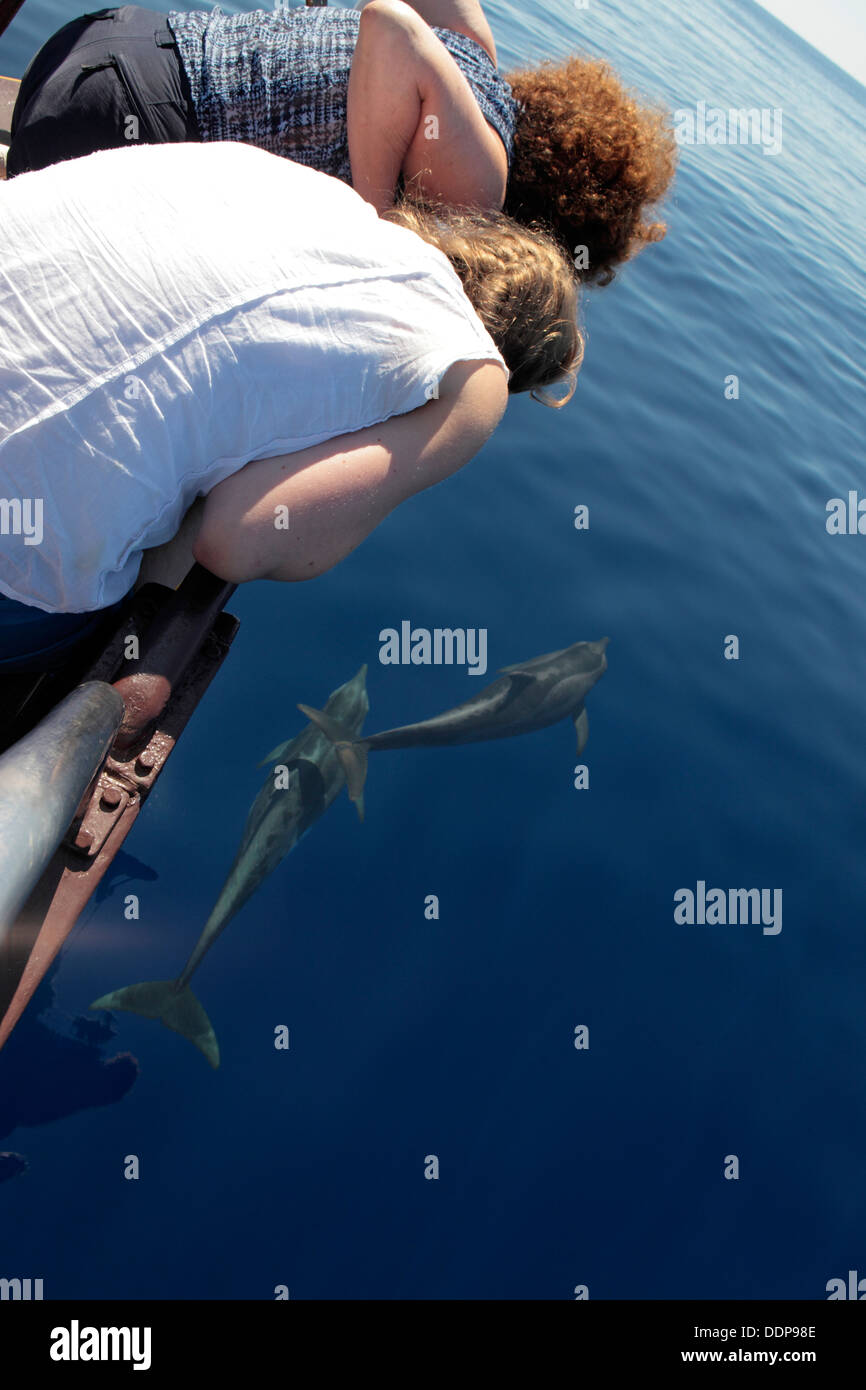 Tourists enjoy watching dolphins from boat, Funchal, Madeira - Stock Image