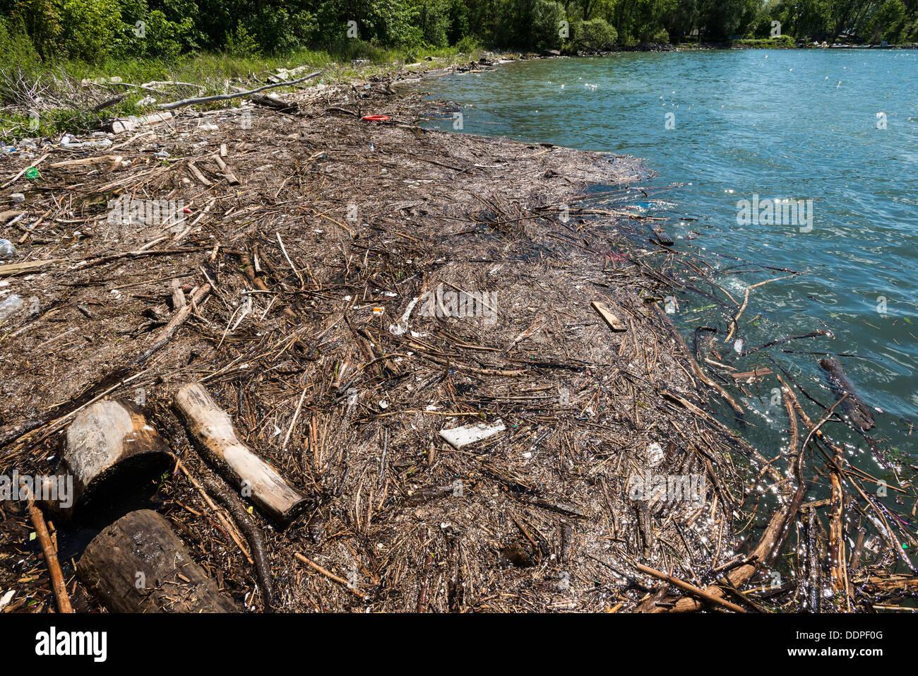 Scum and debris in the water, Ward's Island, Toronto Island Park, Toronto, Ontario, Canada. - Stock Image