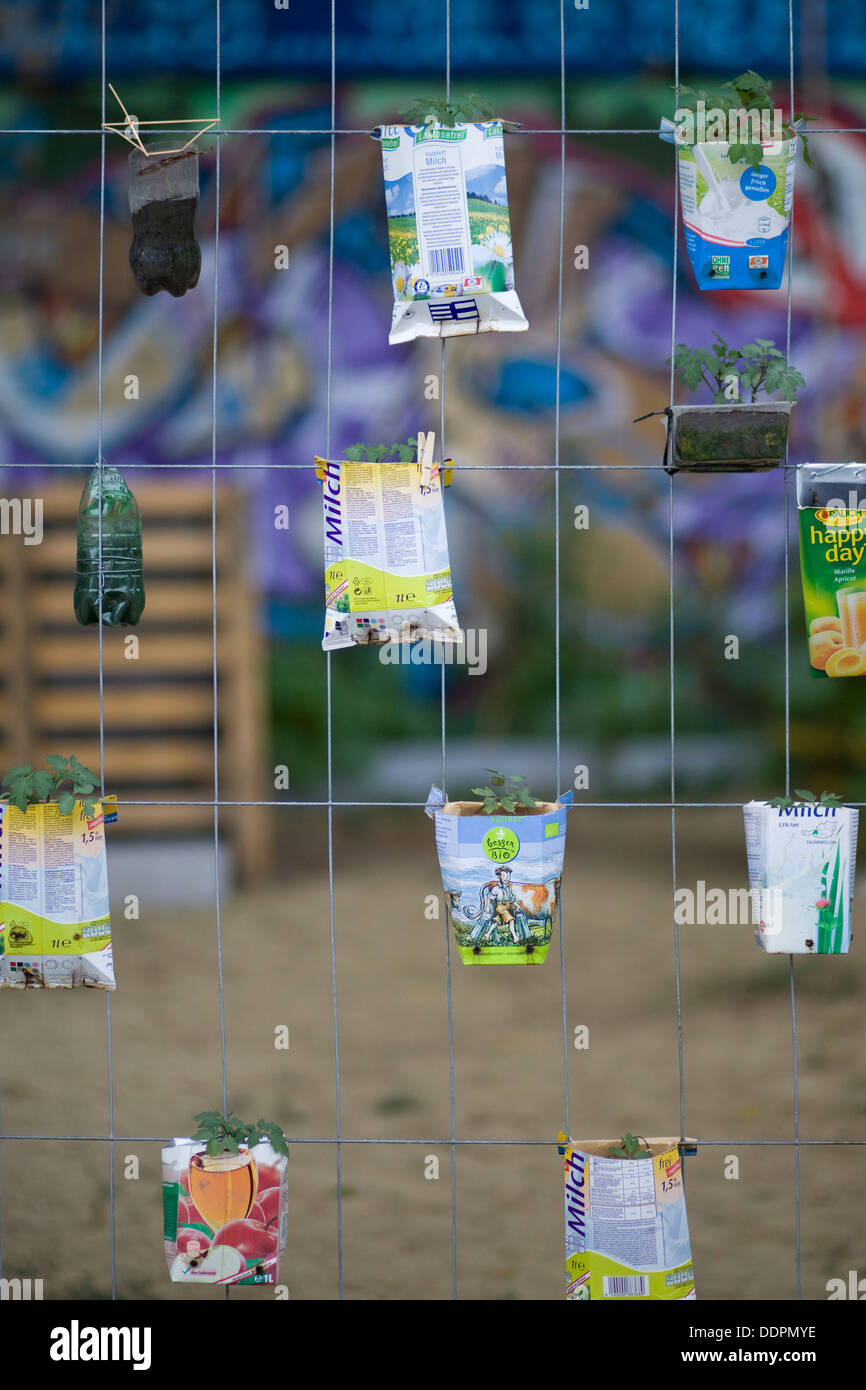 Seed Cartons with Seedlings attached to a fence Recycling Inventive way to recycle - Stock Image