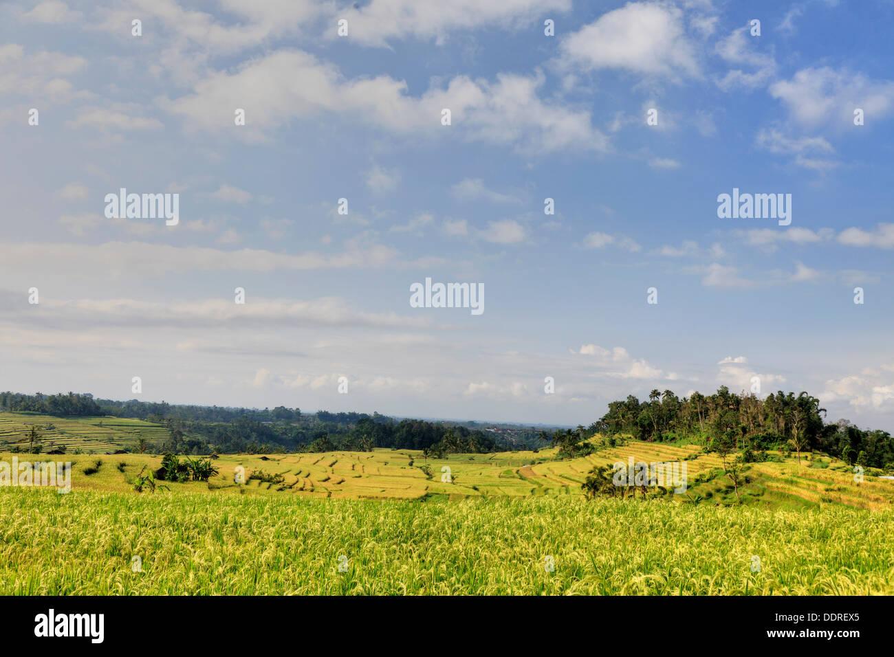 Indonesia Bali Jatiluwih Rice Terraces dawn - Stock Image