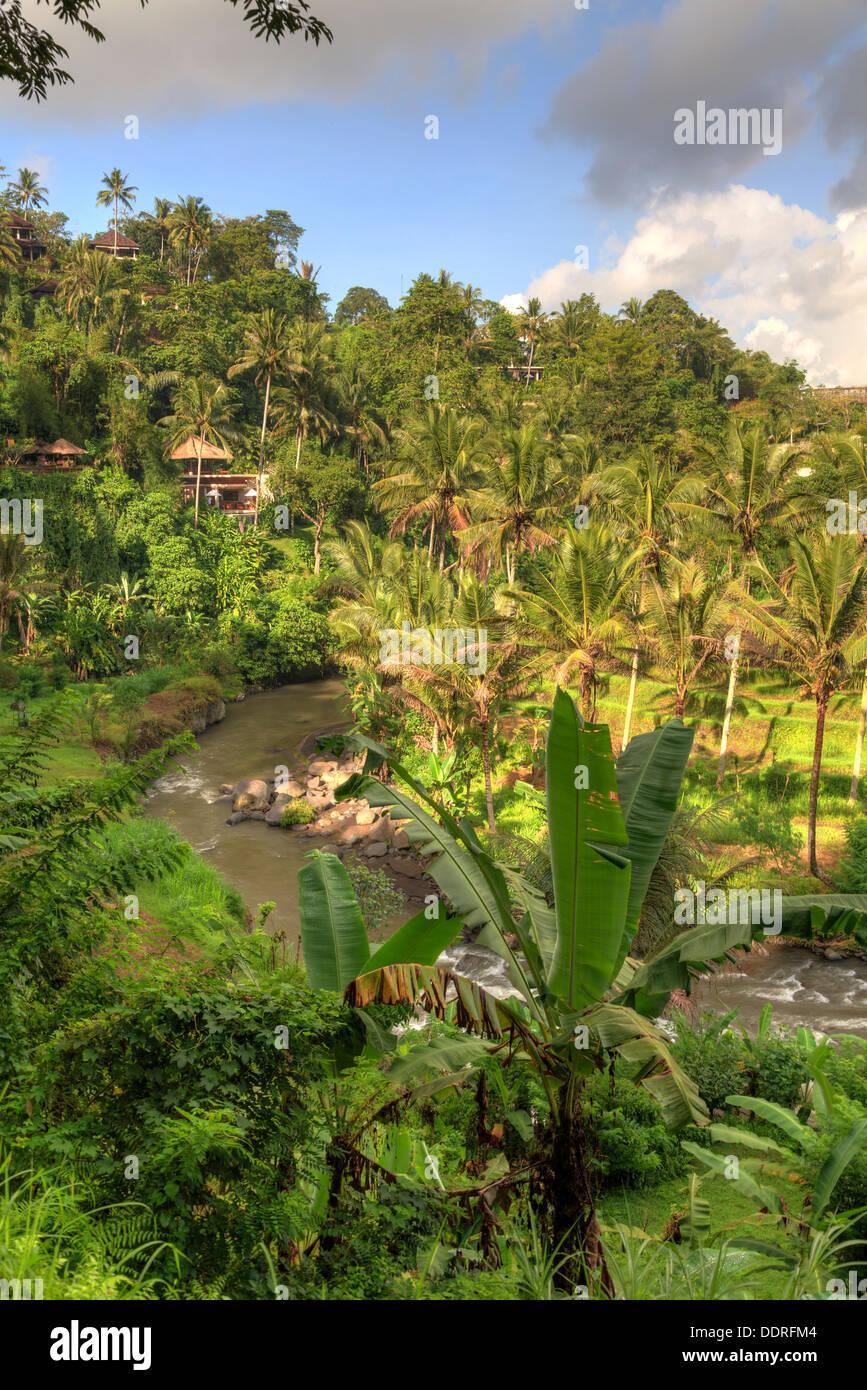 Indonesia, Bali, Ubud, Sayan Valley and Ayung River - Stock Image
