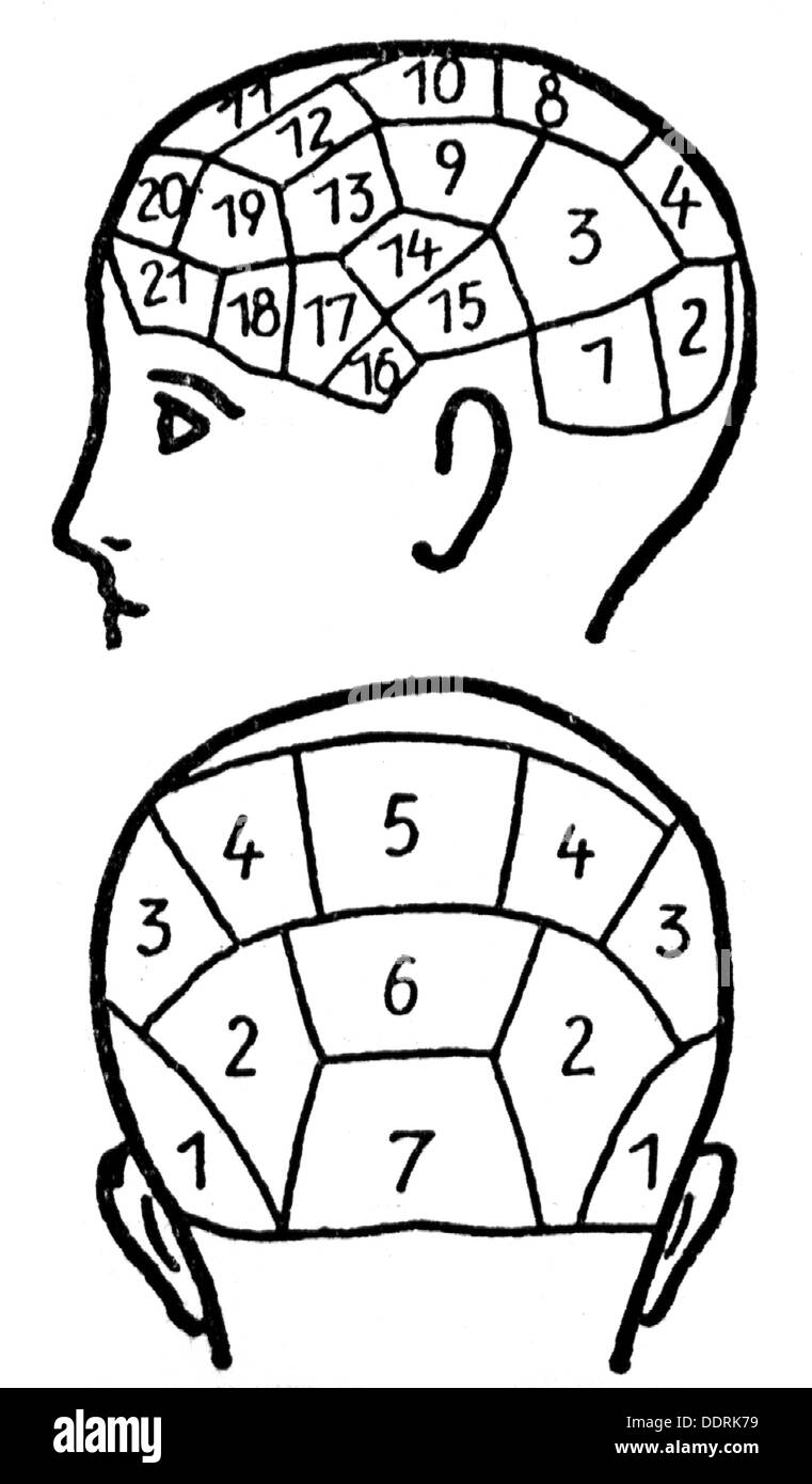 medicine, anatomy, cerebric / cranium, cerebric theory according to Franz Joseph Gall (1758 - 1828) with description of the individual centers of the brain, drawing, graphic, graphics, head, heads, phrenology, thinking, think, character, characters, character trait, trait, traits, ability, abilities, intelligence, psyche, personality, personalities, pseudoscience, centre, center, centres, centers, brain, brains, medicine, medicines, individual, individuals, historic, historical, people, 19th century, Additional-Rights-Clearences-NA - Stock Image