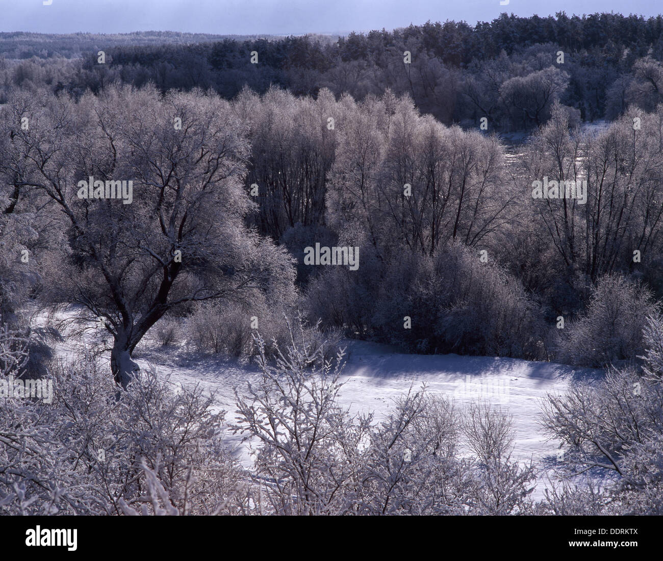 Trees covered with whitefrost in Mazowsze region. Central Poland Stock Photo