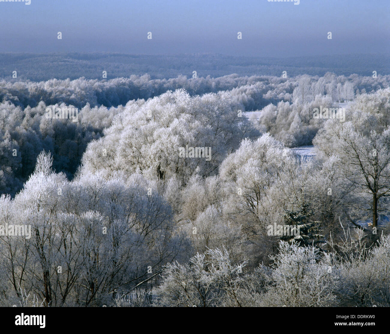 Trees covered with whitefrost in Podlasie, Eastern Poland Stock Photo